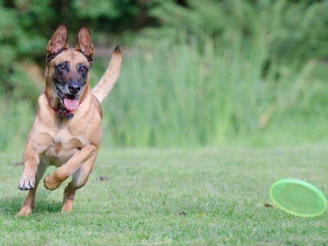 Puppy challenge (8 praktijk + 2 online lessen)