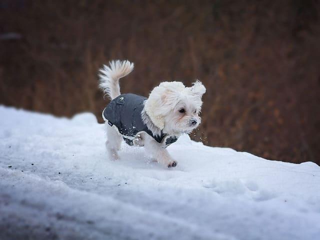Jonge honden behendigheid