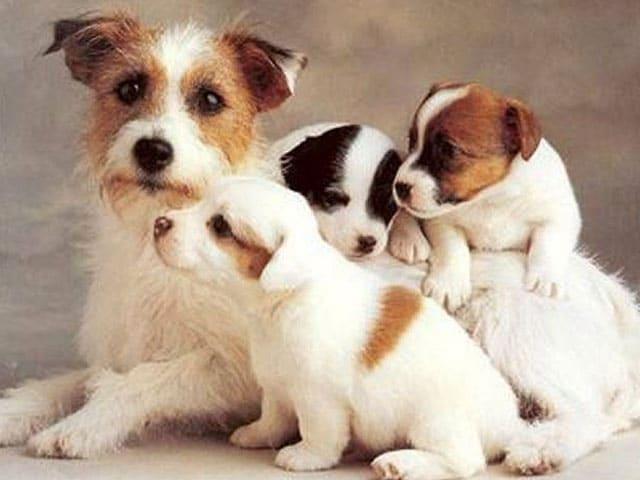 Wanneer mag de pup naar puppytraining?